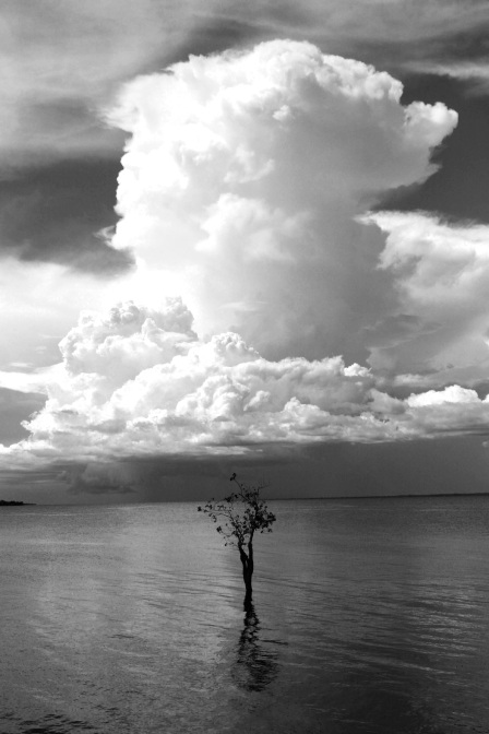 Rio Negro Tree B&W