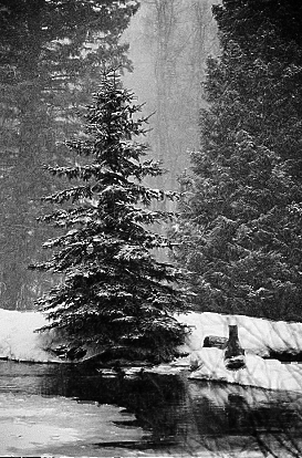 aspen2_winterstorm
