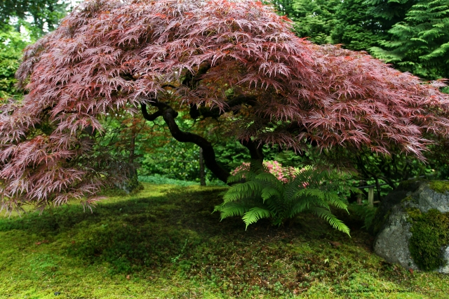 From the Portland Japanese Garden