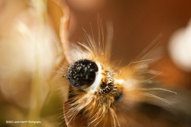caterpillar-4261