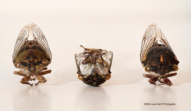 cicada-8563-67_stack