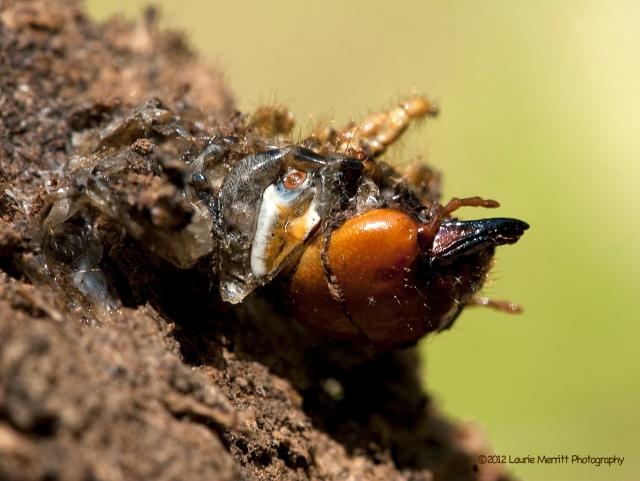 bugs-4557_cr2k