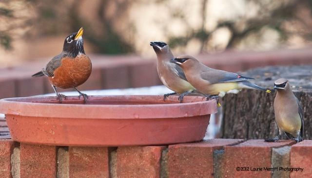 birds-1389_1500