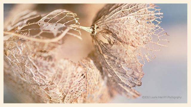 bugs-9584_cr2k