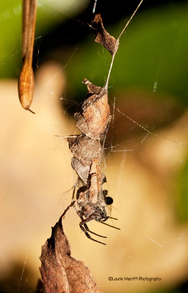 bugs-9691_1500