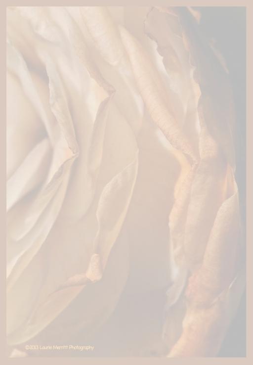 macro-1875_180r