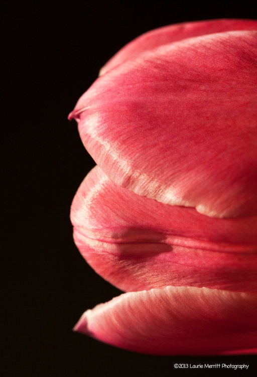 tulips-2327_180r