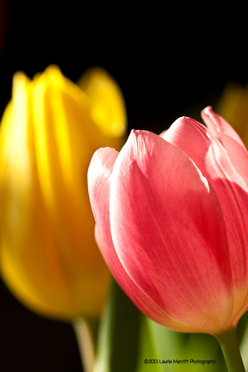 tulips-2333_180r