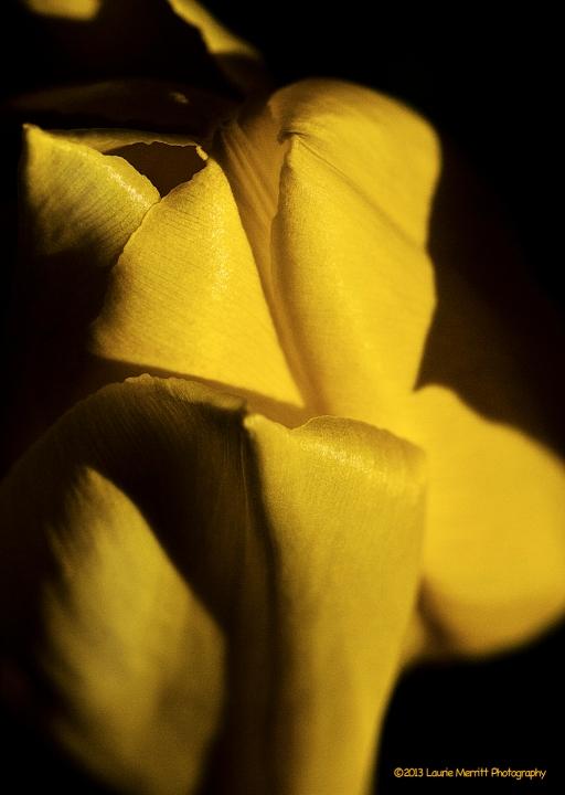 tulips-2341_180r