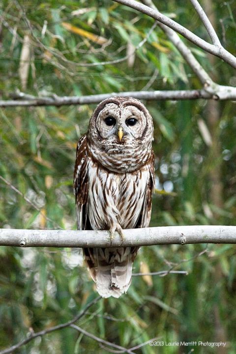 owls-2677_900