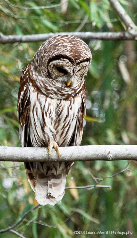 owls-2678_900