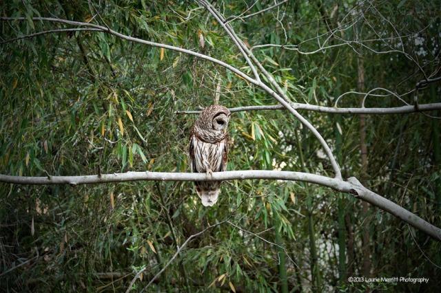 owls-2680_900