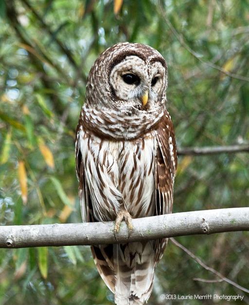 owls-2690_900