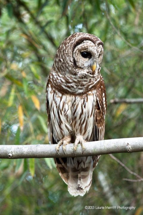 owls-2691_900