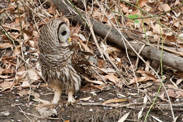 owls-2734_900