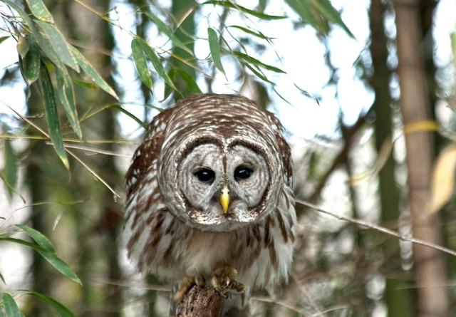 owls-2771_900