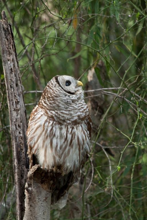 owls-2820