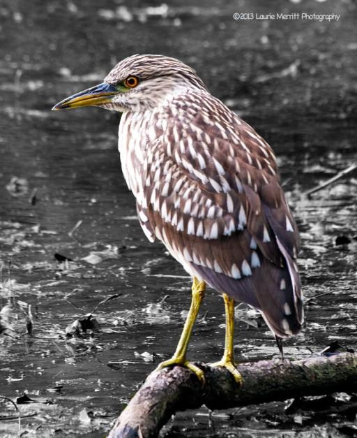 bogbirds-4070_chmx_900