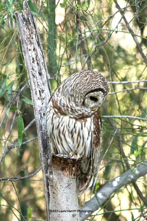owls-2967_900