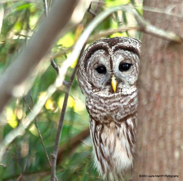 owls-2979_900