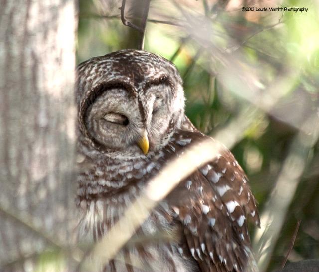 owls-2992_900