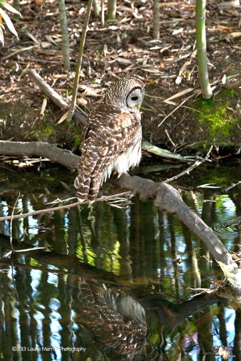 owls-3008_900