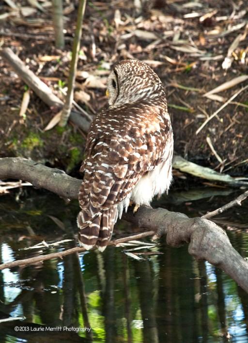 owls-3009_900