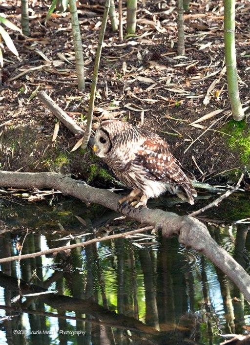 owls-3010_900