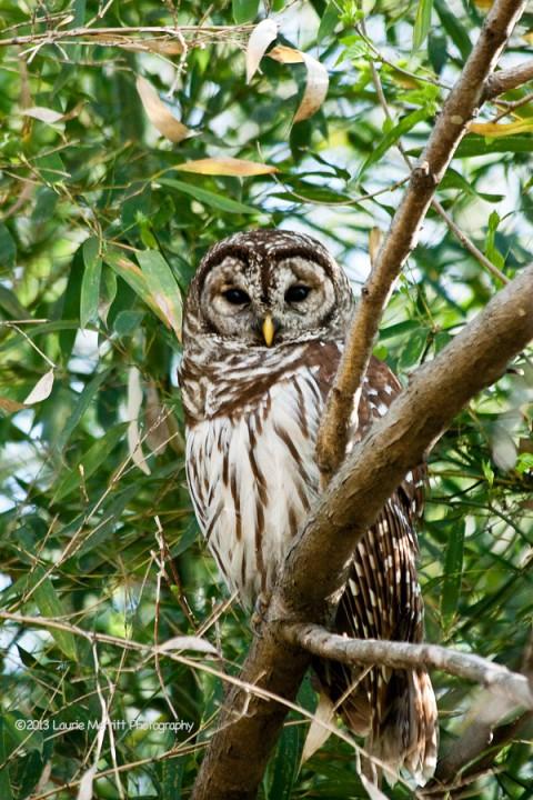 owls-3020_900