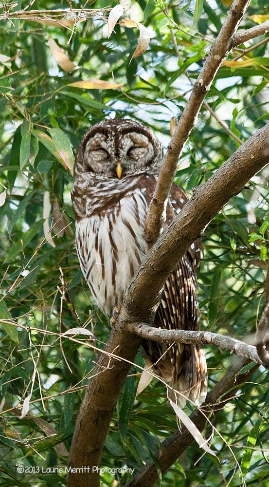 owls-3022_900