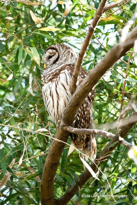 owls-3029_900