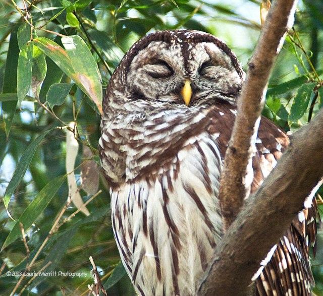 owls-3032_900