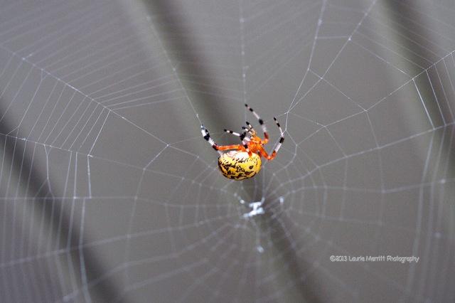 spider-1064_900