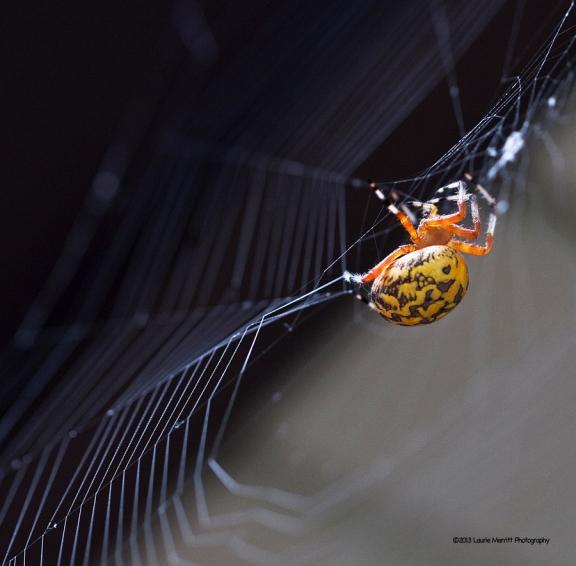 spider-1067_900