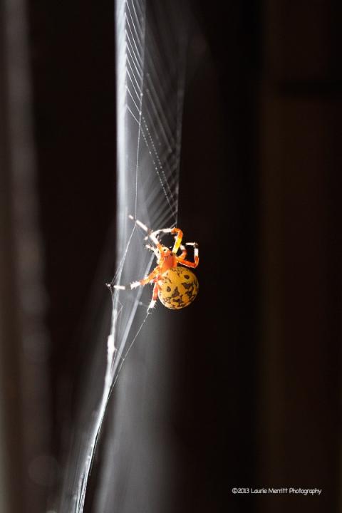 spider-1071_900