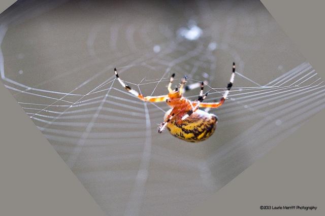 spider-1075_900