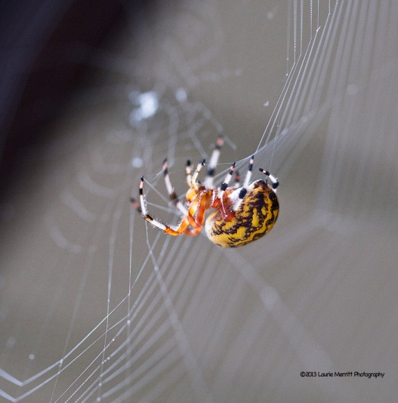 spider-1077_900