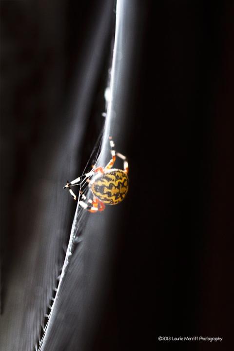 spider-1078_900