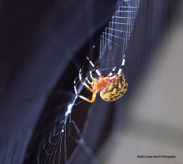 spider-1084_900