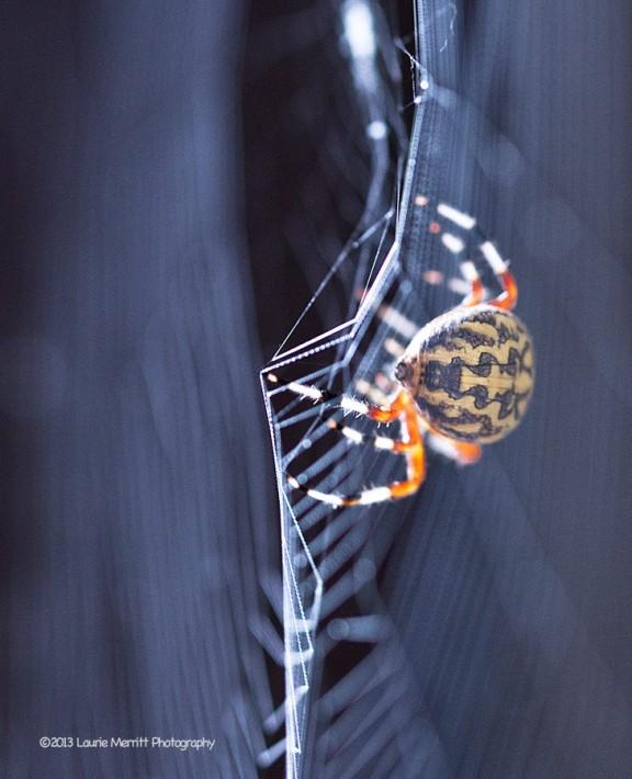 spider-1086_900