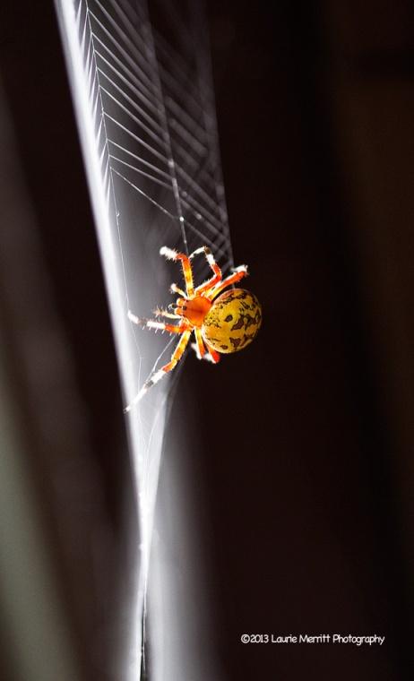 spider-1087_900