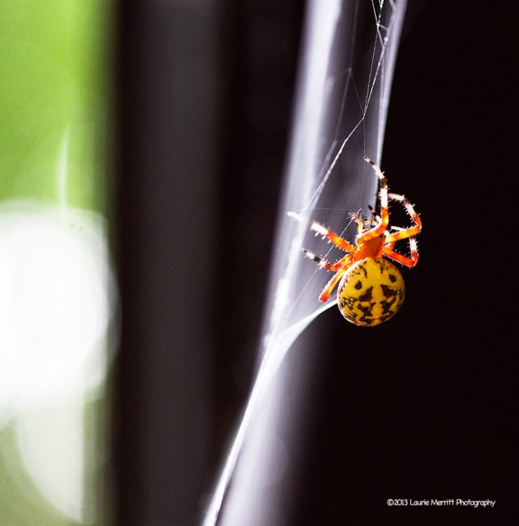 spider-1091_900