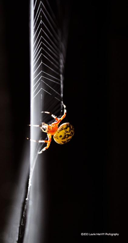 spider-1093_900