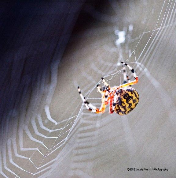 spider-1097_900