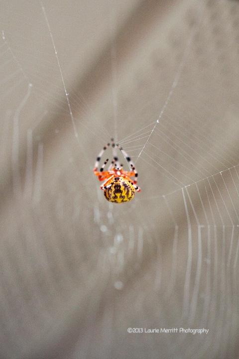 spider-1106_900
