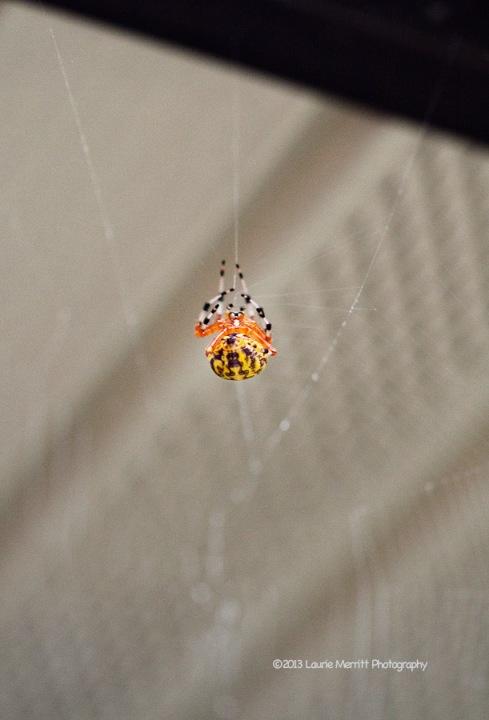 spider-1107_900