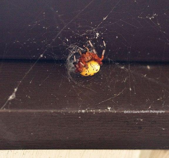 spider-1113_900