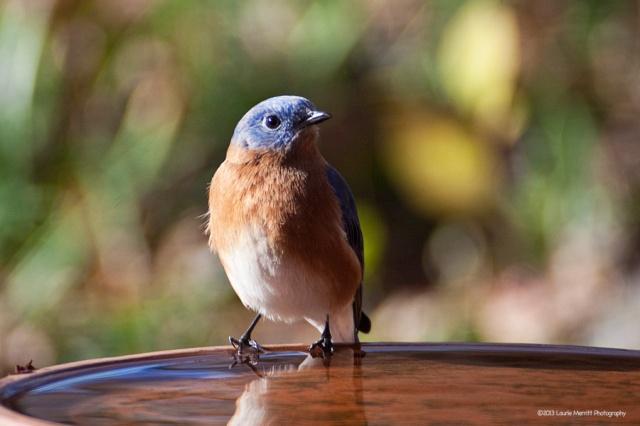 bluebird-2719_900