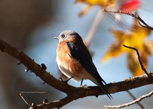 bluebird-2740_900