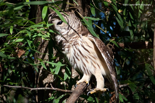 owl-2105_900